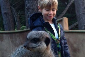 Henry meets a meerkat. Photo / Danielle Wright