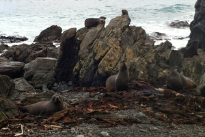 Seals bask on the rocks. Photo / Danielle Wright