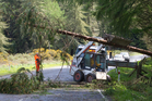 A tree fell down on Tarawera Rd
