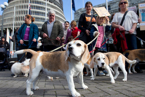 Animal welfare advocates with dogs rescued from animal testing laboratories. Photo / Mark Mitchell
