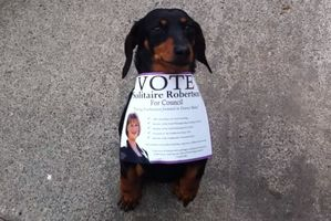 Even a friendly reminder from Solitaire Robinson's dog Bella wasn't enough to boost the voter return.  Photo / File
