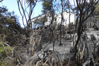 Firefighters are amazed this Hihi house survived the first serious scrub fire of the season.