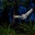 The Natural History Museum Wildlife Photographer of the Year 2013.'Owl' by Connor Stefanison