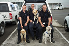 Auckland handlers and their dogs.  From left to right, Customs Officer Brendon Kircher and Roxy, Senior Customs Officers Chad Golding and India, and Customs Officer Paul Ferguson and Zulu.