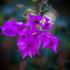 A flower from Hidden Valley Eco Resort. Photo / Greg Bowker