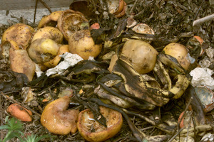 Organic waste accounts for about 50% of Auckland's landfill waste. Photo / NZ Herald