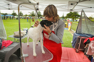 Sandy Evans of Waipukurau gives a kiss to her fox terrier Blaze 3 at grooming time.