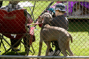 Ruahine kennel association dog show, Dannevirke showgrounds.