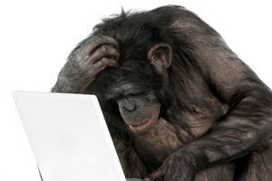 Chimpanzees have better short-term memories than humans. Photo / Getty Images