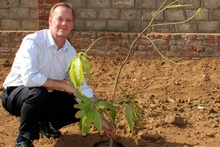Paul Zuckerman, chief executive of Fletcher's laminates division, plants a mango tree in the grounds of the factory.