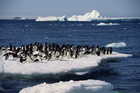 NZ has failed in its bid to establish the world's largest marine reserve in Antarctica. Photo /Getty