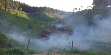 BLAZING: Firefighters were called to battle an out-of-control rubbish fire which spread to a shelter belt.