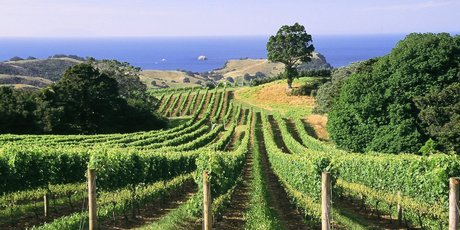Waiheke vineyards are among Auckland's attractions.