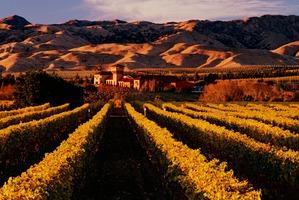 The Highfield Estate winery.