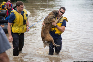 A four-legged friend is rescued from floods in Austin, Texas. Photo / Austin Fire Department