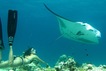 Karin swims with a manta ray in Suwarrow.