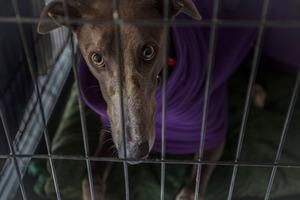 At Turangi, inmates can help to rehabilitate greyhounds. Photo / Michael Craig