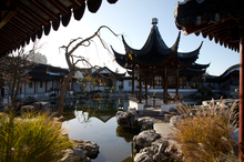 Relax and unwind in the Chinese Garden. Photo / Tourism Dunedin