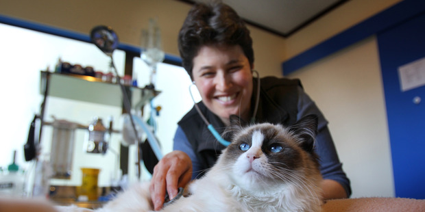 Holistic Vets director Liza Schneider and rag doll cat Pisa will be stars in a new television show. Photo / John Borren
