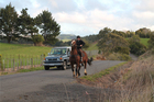 Horses can be spooked by a careless motorist.Photo / Jan Mossman