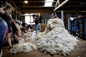 Wool prices have risen 10 per cent to a 22-month high in the latest commodity price index. Photo / File