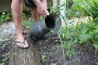 Organic gardening: Make sure your veggies are well-watered.   Photo / Paul Thompson