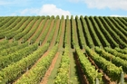 A vineyard's soil acts rather like a person's accent - it instantly identifies geographic origins and to a telling degree, personality.