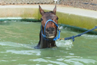 Christen Me cools off  after his workout on Sunday. Picture / ODT