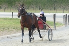 Caribbean Blaster and Kate Gath enjoy a workout at Cran Dalgety's property yesterday. Photo / Otago Daily Times