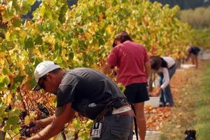 Winemaking in Martinborough. Photo / Supplied.