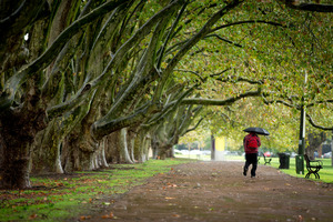 Victoria Park in Auckland City. Photo / Dean Purcell