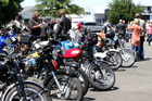 The bikers' hogs all lined up at Anderson Park in Napier. Photo / Paul Taylor