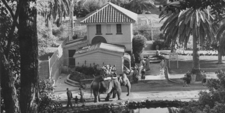 Elephant rides on Jamuna at Auckland zoo. Photo / NZ Herald Archive