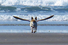 The dog-bird on Opotiki Beach