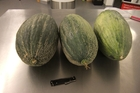 The seized melons. Photo / MPI