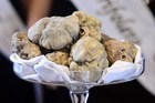 Truffles are displayed at the World Alba White Truffles Auction in Grinzane Cavour in northwestern Italy. Photo / AFP