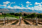 Central Otago is known for it's remarkable wine. Photo / Thinkstock