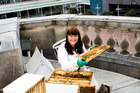 Beekeeper Kim Kneijber tends to the bees kept on top of the Town Hall. Photo / Babiche Martens.
