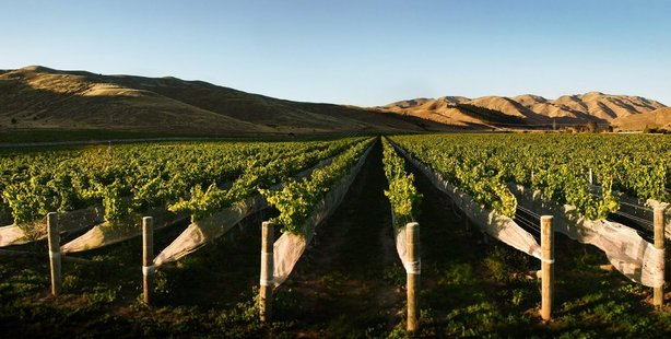 Our wines, including Marlborough sauvignon blanc which has a reputation that stretches round the globe, are a 'flagship product'.