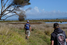 The walk takes you past the Kaipara Harbour salt marshes. Photo / Supplied
