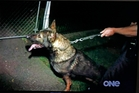 Police dog Tank appeared on Dog Squad and was later involved in an incident with an innocent man.