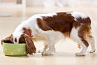 Consumer NZ found in July that the cheapest dog food cost $196-a-year compared with $4,593 for the most expensive. Photo / Thinkstock