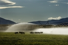 The agriculture sector is showing the most optimism in terms of profitability. Photo / David White