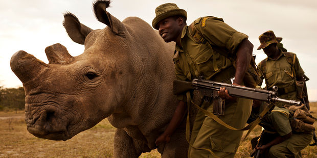 A four man anti-poaching team permanently guards Northern White Rhino on Ol Pejeta Conservancy in Kenya.  Photo / Brent Stirton
