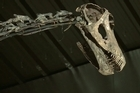 A rare full skeleton of a huge diplodocus dinosaur sold in Britain for £400,000 ($630,000, 470,000 euros).