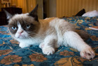 The world famous Grumpy Cat. Photo / Creative Commons
