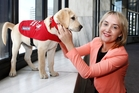 Civil Defence Minister Nikki Kaye, with trainee guide dog Vera, says the identification tags will help in an emergency. Photo / Mark Mitchell
