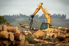 Nine workers have died in forestry accidents this year. Photo / Natalie Slade