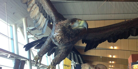 A 43m giant eagle has been installed to soar over the heads of visitors ahead of the release of the second instalment of Sir Peter Jackson's trilogy <i>The Hobbit: The Desolation of Smaug</i>.