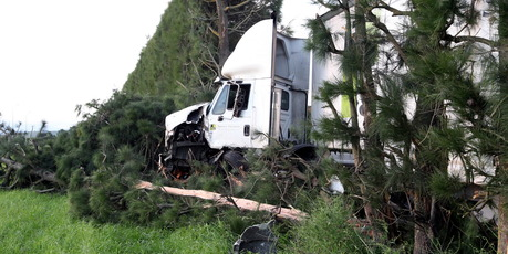 OFF ROAD: A truck and trailer crashed into a shelterbelt near Hastings last night. PHOTO/PAUL TAYLOR